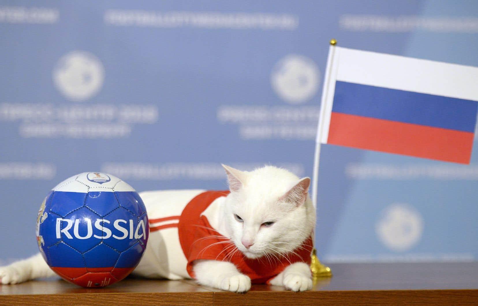 Achille le chat, minou tout blanc et sourd, intronisé devin officiel du Mondial 2018 par le pays hôte