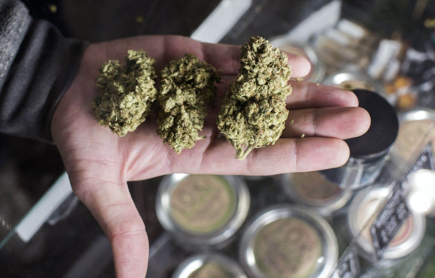 La Société québécoise du cannabis a lancé jeudi un appel de candidatures pour les futurs conseillers en succursale.