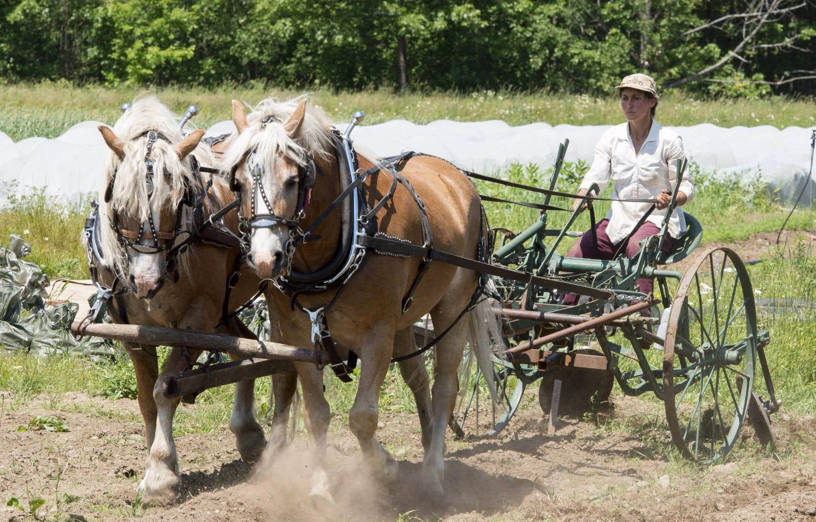 En fouillant les petites annonces, Mylaine Massicotte a dénichéJack et Alfie, deux petits et robustes chevaux Haflinger à la robe alezan et à la crinière blonde.