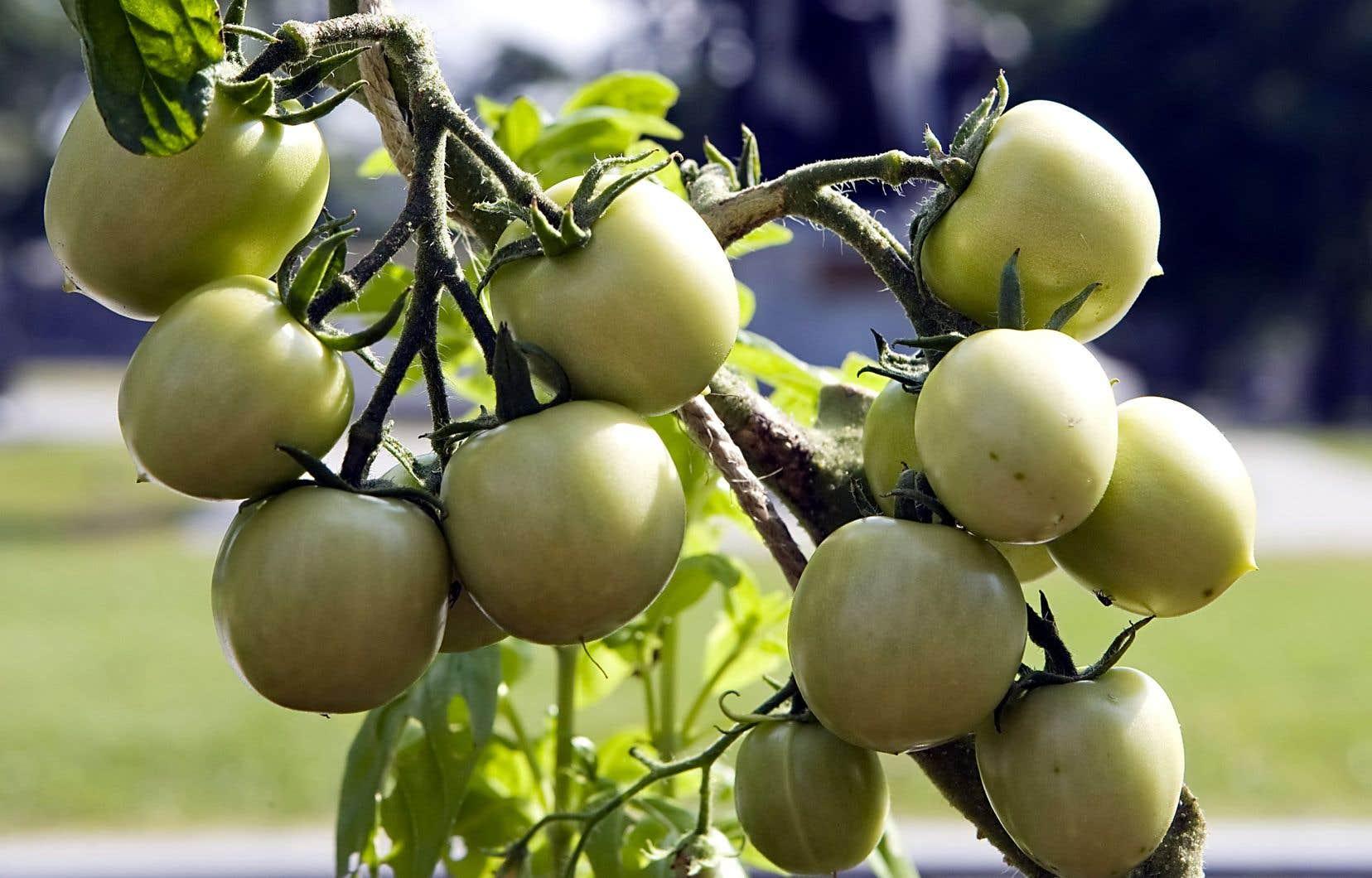 La fertilisation est avant tout essentielle pour les légumes, les fleurs annuelles et les plantes en pot.