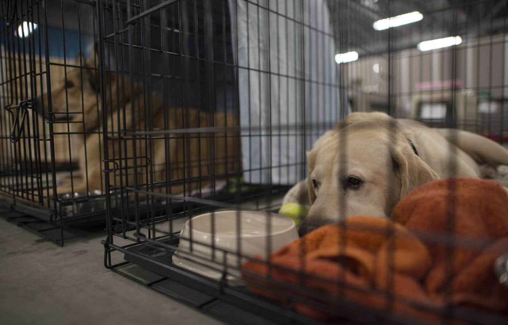 La SPCA allègue que les ententes prévoyant que ce sont les inspecteurs de la SPCA qui appliquent la loi de la protection des animaux sont échues depuis le 31mars 2018.