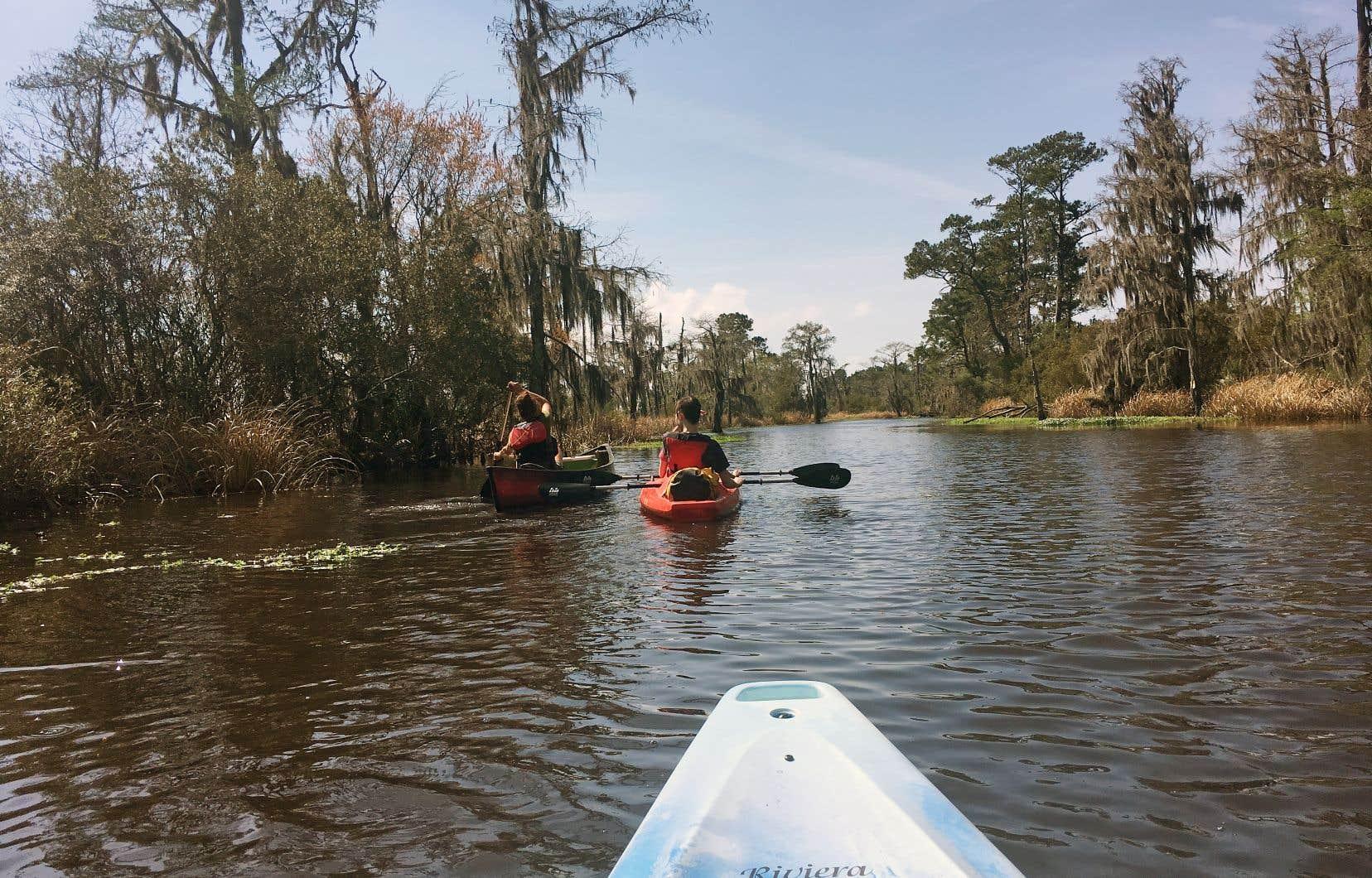 Comme tous les milieux humides, les bayous sont fragiles, et le passage fréquent de gros bateaux remplis de touristes qui parlent fort n'est pas l'idéal pour leur préservation.