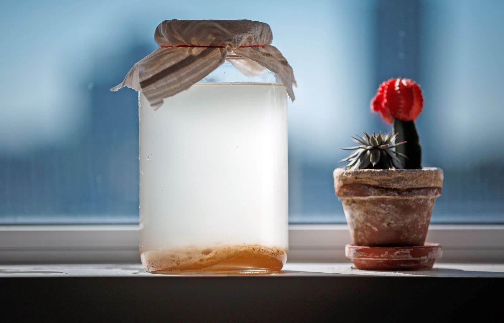S'il est assez simple (et économique!) de faire soi-même son kombucha à la maison, il est facile de rater sa culture en la laissant trop longtemps fermenter ou en n'utilisant pas assez de sucre
