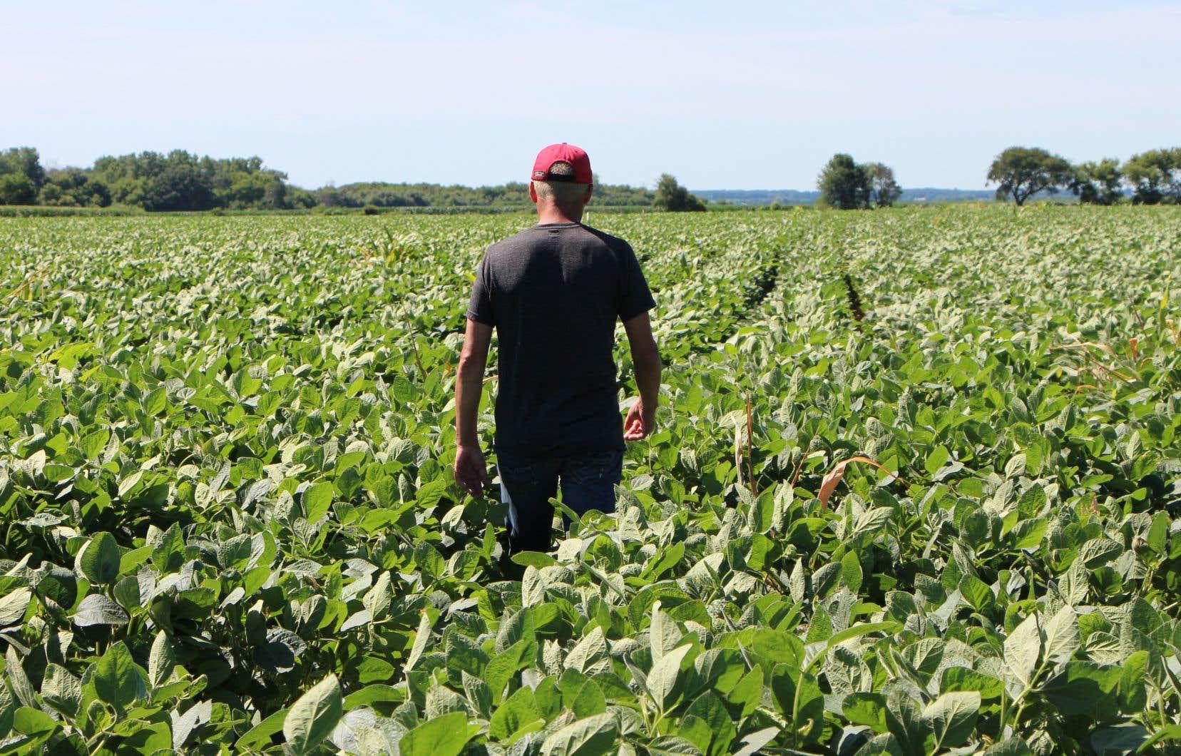 Les producteurs de soja comme Terry Davidson, de l'Illinois, sont visés par les mesures d'aide financière du gouvernement Trump.