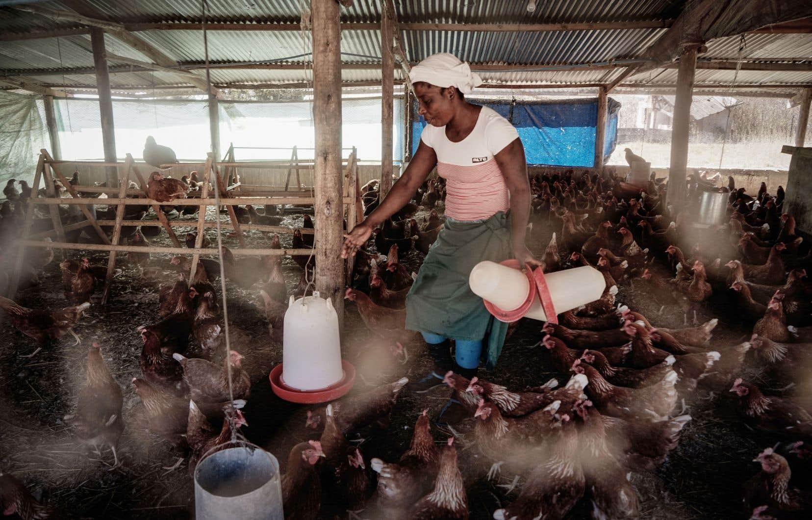 Plus de 4000 agriculteurs blancs ont été expropriés au profit, souvent, de proches de l'ancien président du Zimbabwe, Robert Mugabe.