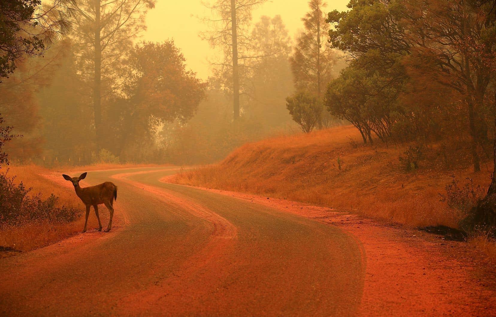 Quelque 63000 hectares ont brûlé dans les 14 incendies en cours dans l'ensemble de la Californie.
