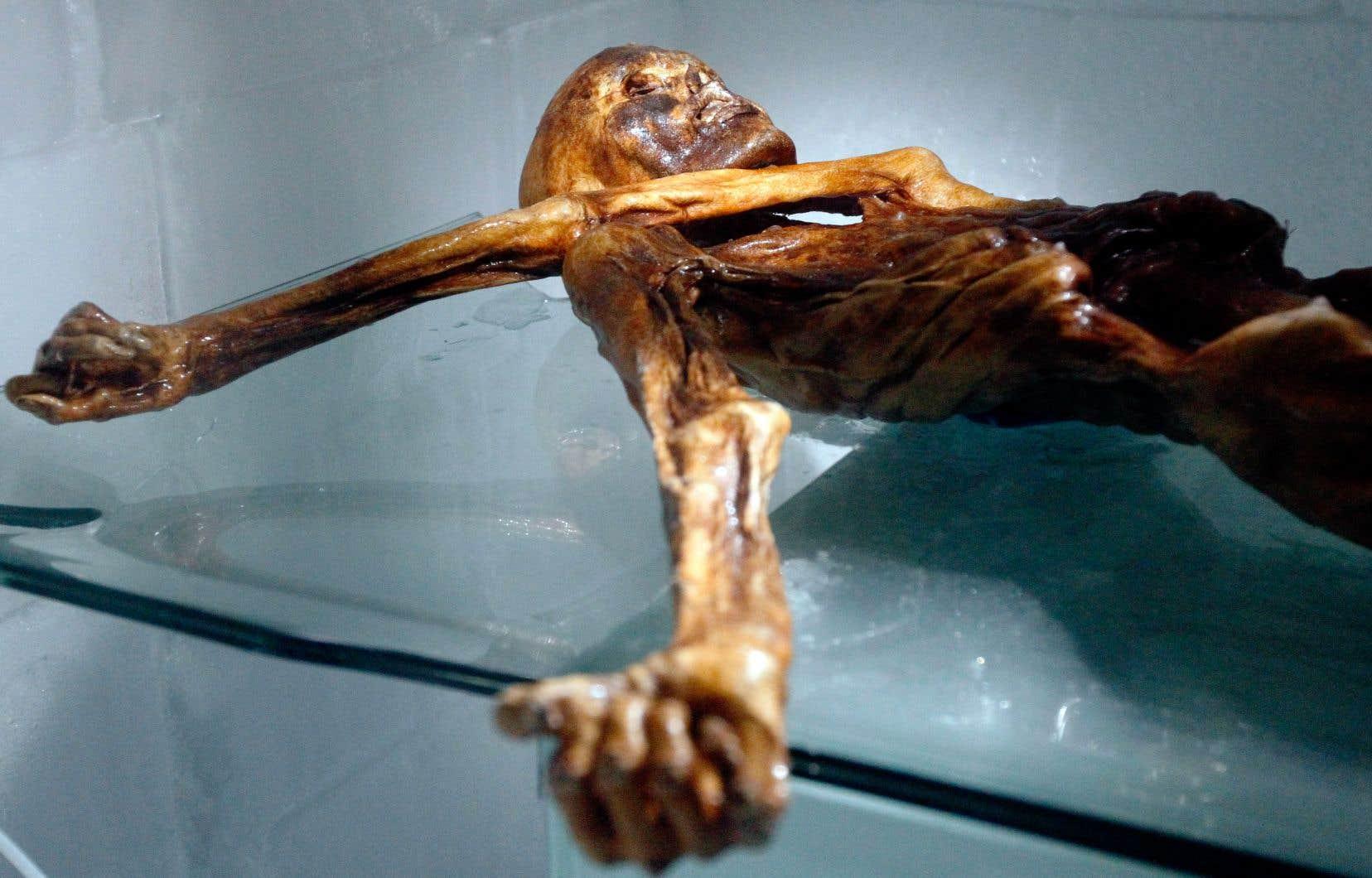 Le cadavre, découvert dans les Alpes italiennes en 1991, est maintenant exposé au Musée d'archéologie du Sud-Tyrol, à Bolzano.