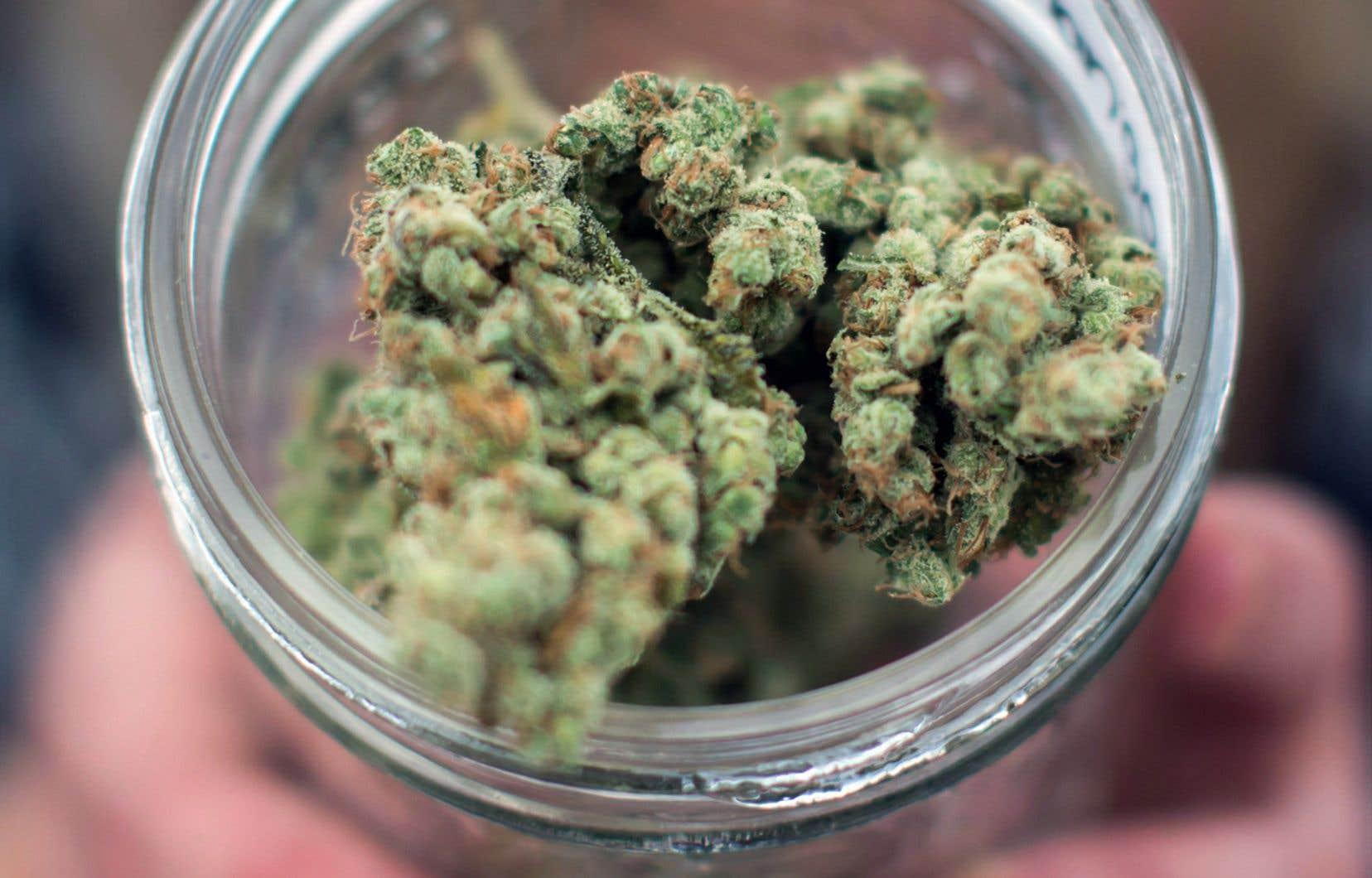 La SQDC commercialisera du cannabis frais et séché et de l'huile de cannabis, mais pas de produits comestibles.