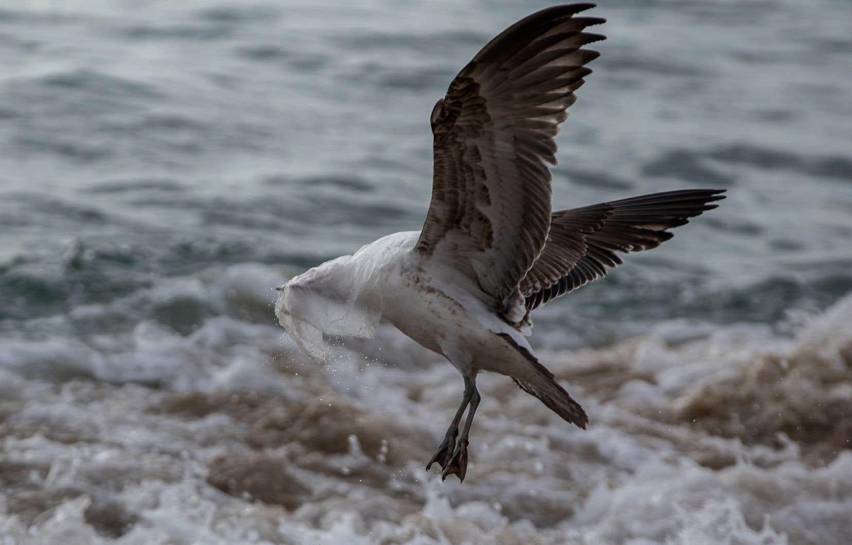 En plus de menacer la vie aquatique, les déchets de plastique qui polluent les océans sont aussi une source importante de GES.