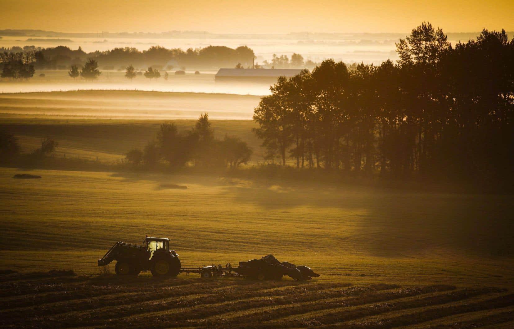 «La gestion de l'offre est certainement aussi légitime que les milliards de dollars du Farm Bill qui subventionnent les agriculteurs américains», affirment les auteurs.