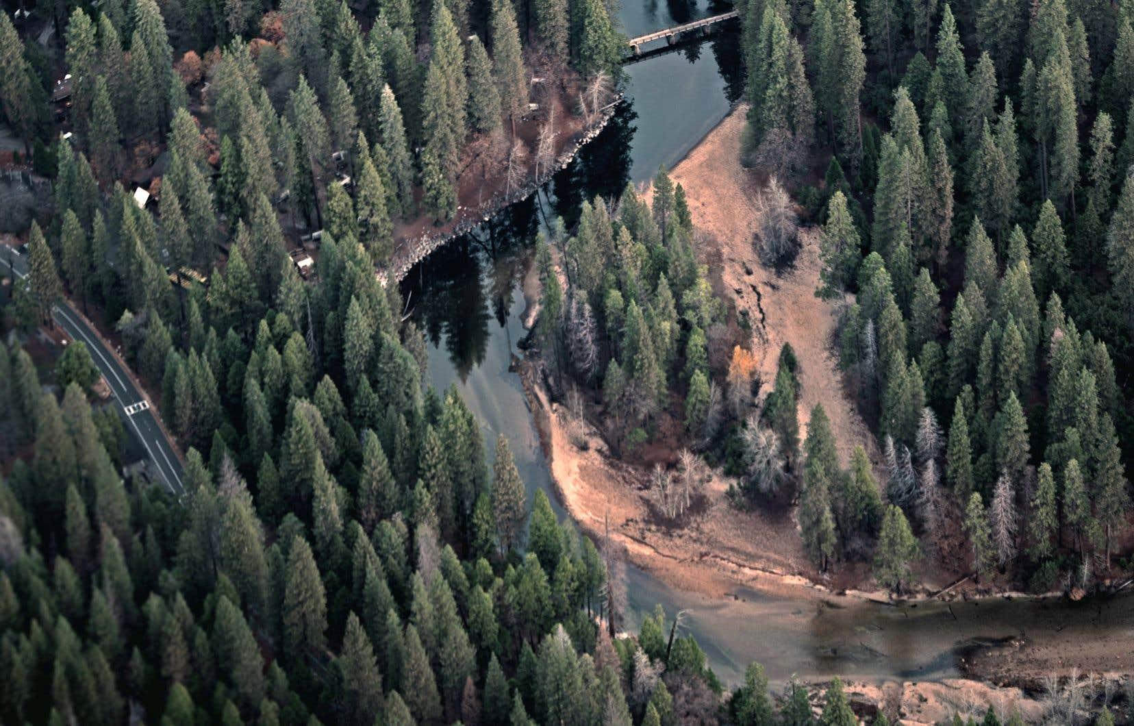 La courte durée de la saison chaude est actuellement le facteur limitant de la croissance des forêts dans les régions nordiques.