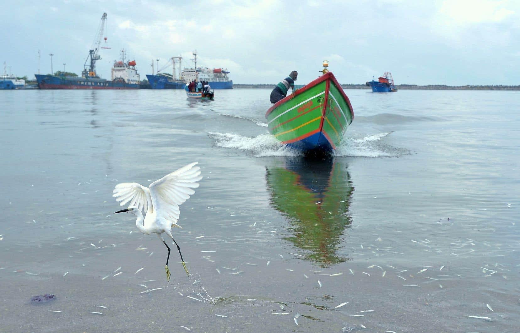 Des centaines de pêcheurs indiens sont acclamés ces derniers jours pour leur héroïsme lors des inondations dans l'État du Kerala, dans le sud-ouest du pays.