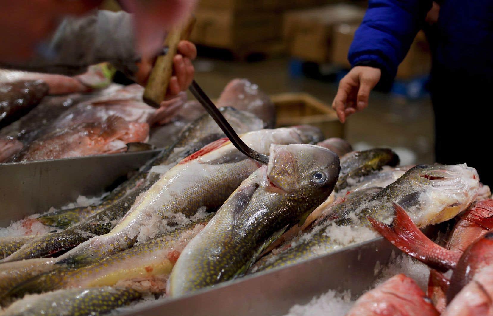 Les produits de la mer sont sensibles à la fraude alimentaire en raison d'une chaîne d'approvisionnement mondiale complexe qui permet un étiquetage accidentel ou délibéré à de nombreux stades.