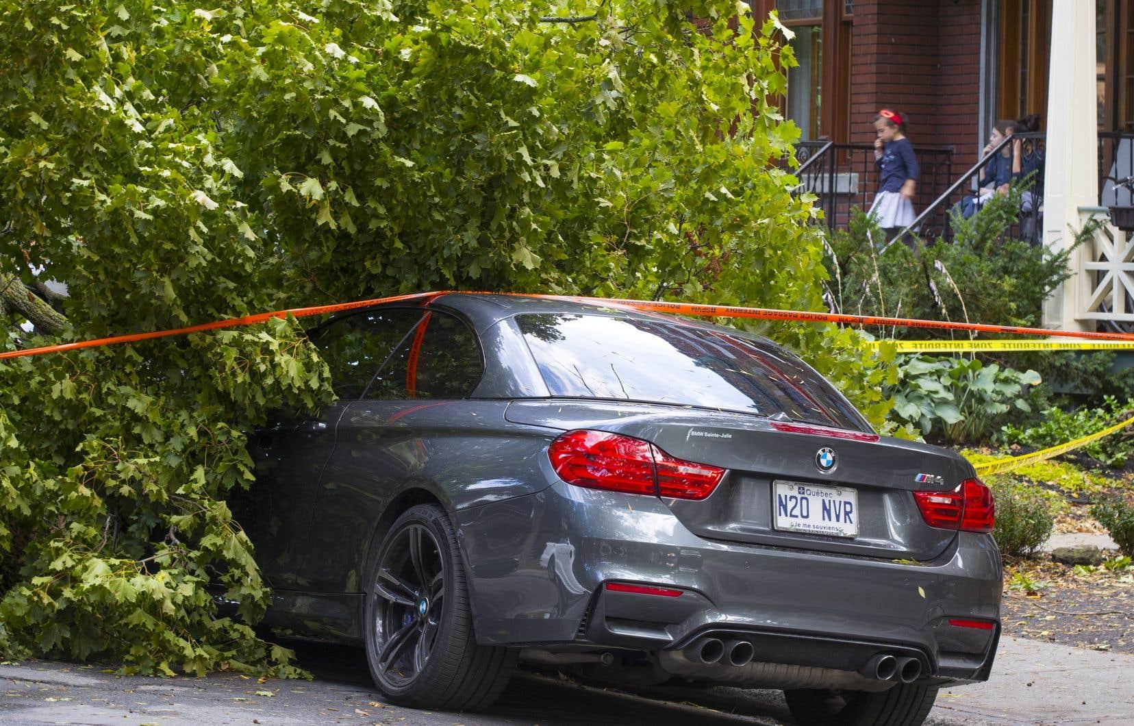 Des rafales de 92 km/h ont été enregistrées a et il y a eu à tout le moins quelques arbres cassés à Montréal.