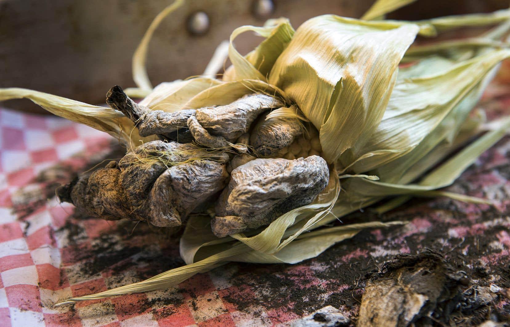 Avec ses excroissances aux teintes douteuses, le huitlacoche fait sourciller, mais sa chair est délicieuse.