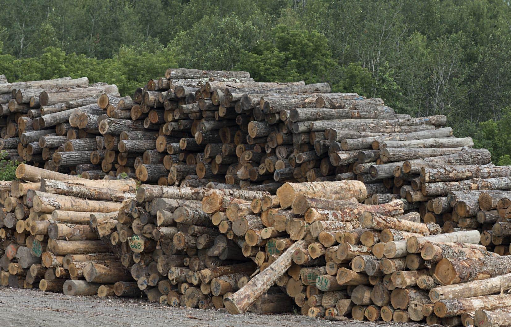 Québec solidaire voudrait que tout bâtiment non résidentiel au Québec ait des infrastructures en bois.