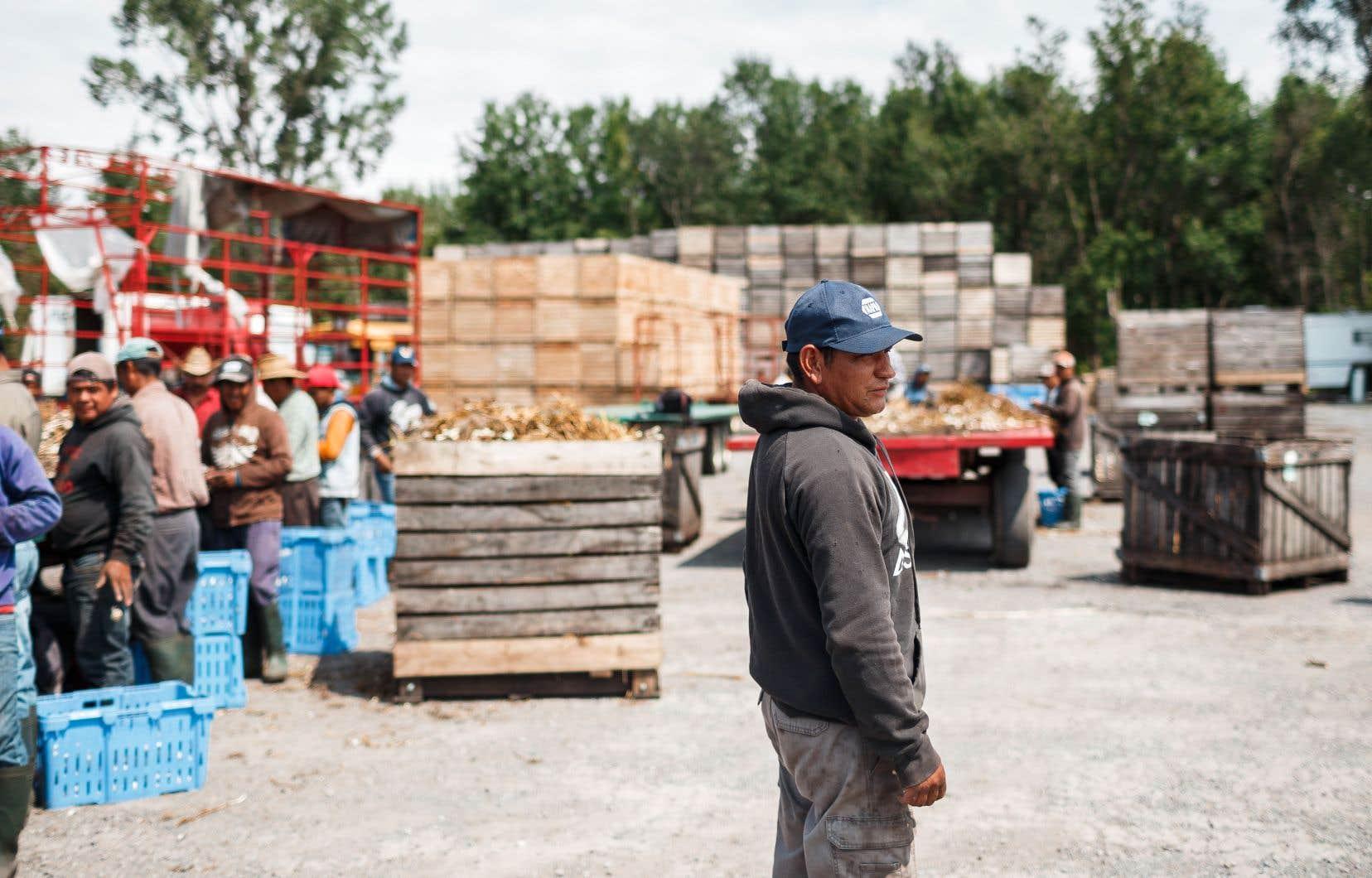 Le Québec pourrait perdre près de 40% de ses immigrants économiques selon les plans du PQ et de la CAQ.
