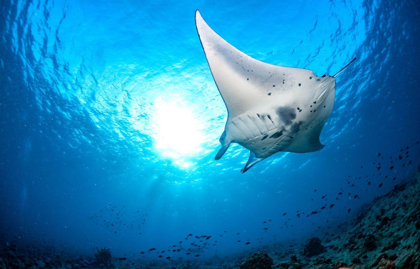 Parmi ces quelque 13000 séquences d'ADN, plus de 1600 appartenaient à 91 espèces vivant dans les abysses océaniques et les systèmes hydrothermaux. Certains brevets protègent par exemple des séquences génétiques appartenant à du sperme de baleine et de raie manta océanique.