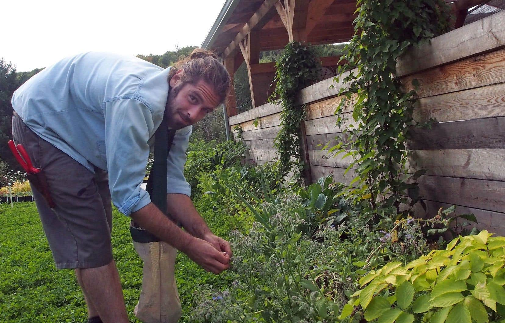 Guillaume Pelland, de chez Paysage Gourmand, à la récolte de fleurs<br /> <br />