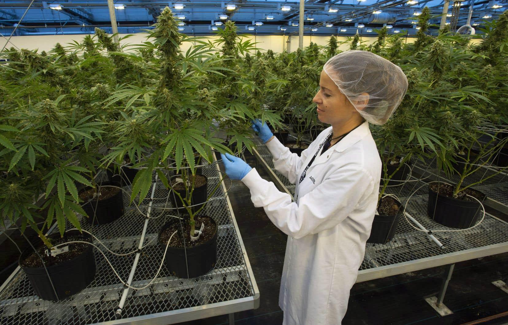 Après avoir glissé de 8 % mardi, le producteur gatinois Hexo, plus gros fournisseur de la Société québécoise du cannabis, a de nouveau reculé de 6%, à 7,74$.