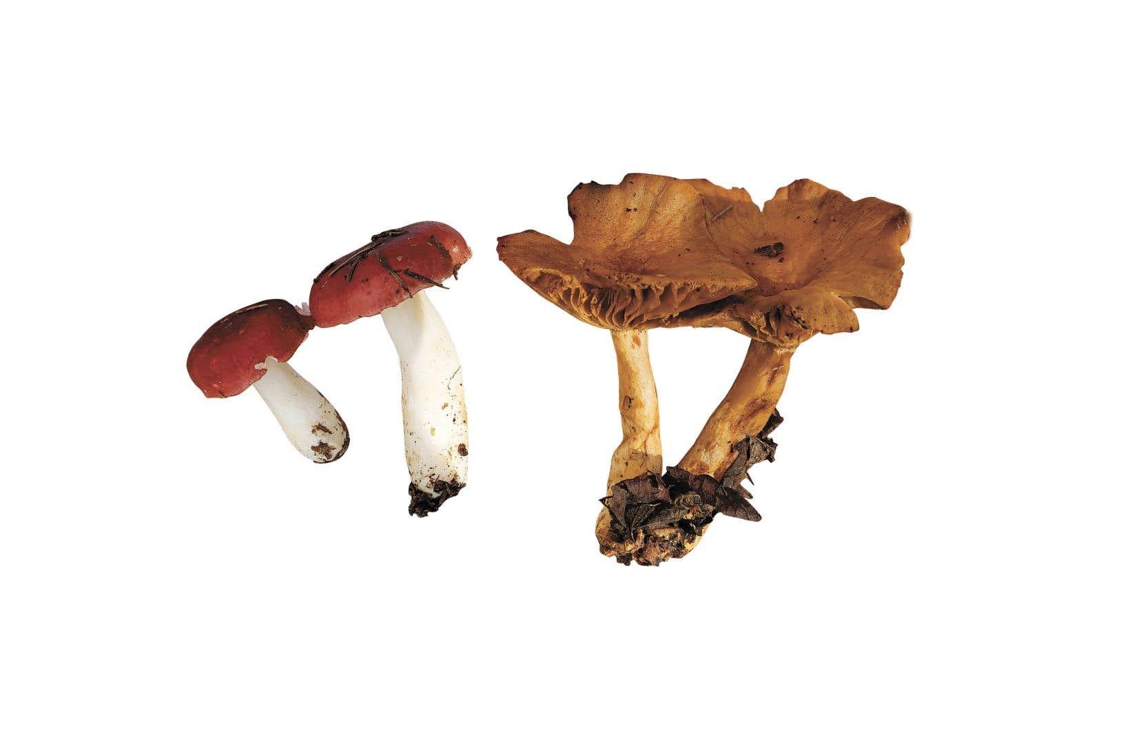 Il existe environ 3000 variétés de champignon au Québec.