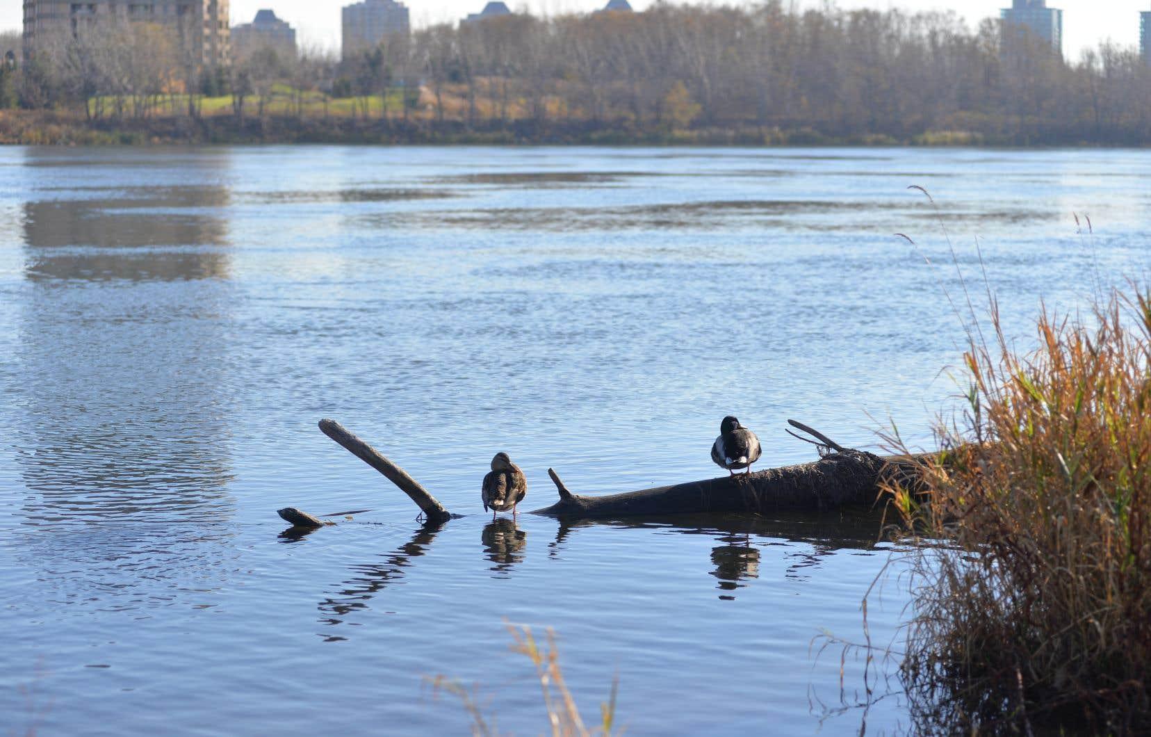 En 2015, le déversement d'eaux usées dans le fleuve Saint-Laurent à Montréal avait fait couler beaucoup d'encre.