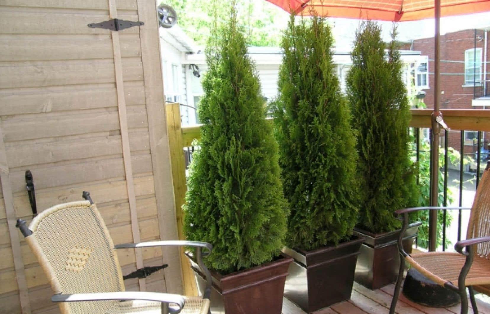 Arbre En Pot Terrasse un balcon tout vert | le devoir