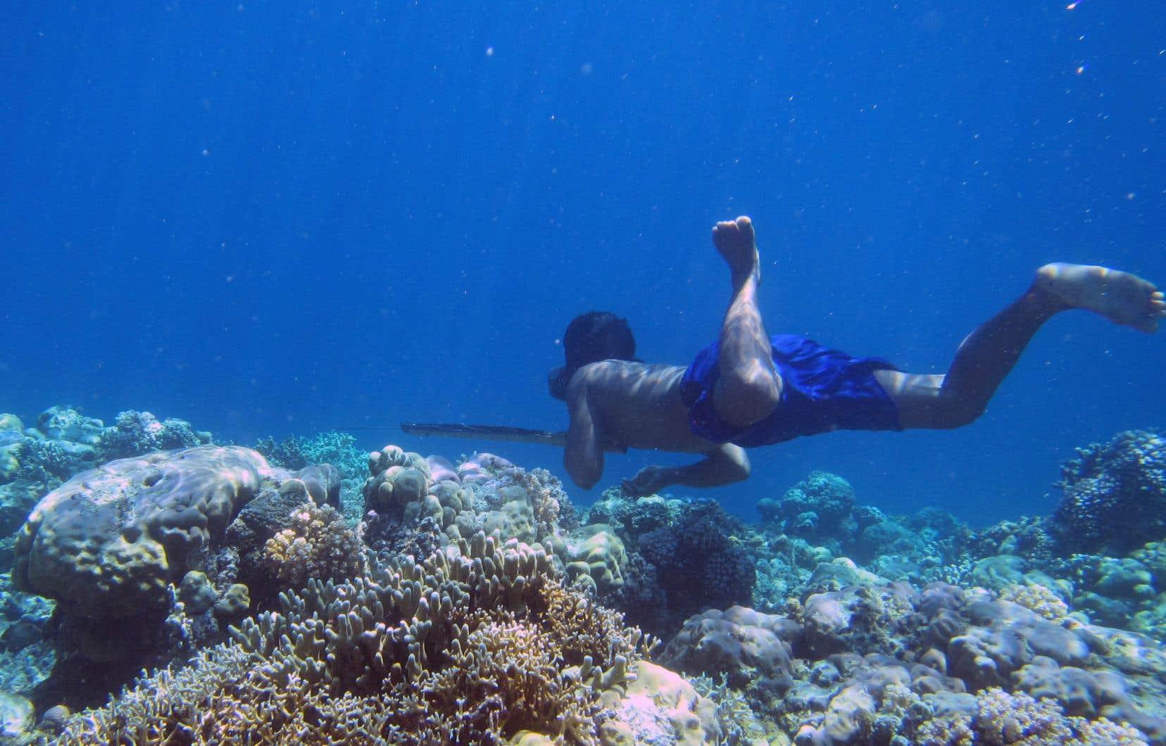 Des chercheurs ont repéré chez un peuple de marins de l'Asie du Sud-Est une adaptation biologique qui leur permet une meilleure répartition du sang et de l'oxygène lors d'un passage prolongé sous l'eau.