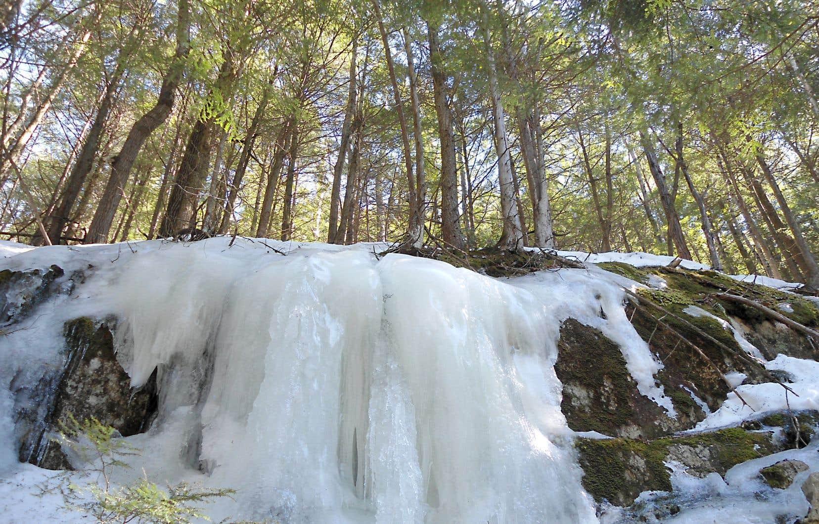 Escarpement rocheux couvert d'une coulée de glace dans la réserve Alfred-Kelly (parc des Falaises)