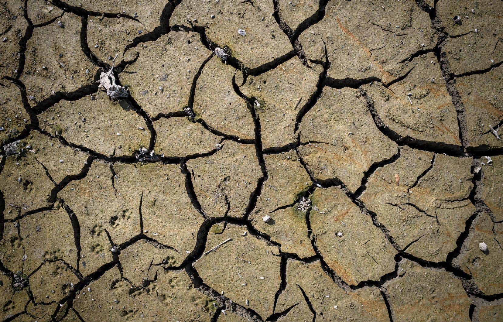 D'ici 100ans, seule la moitié des réserves d'eaux souterraines pourrait se recharger totalement ou se rééquilibrer.