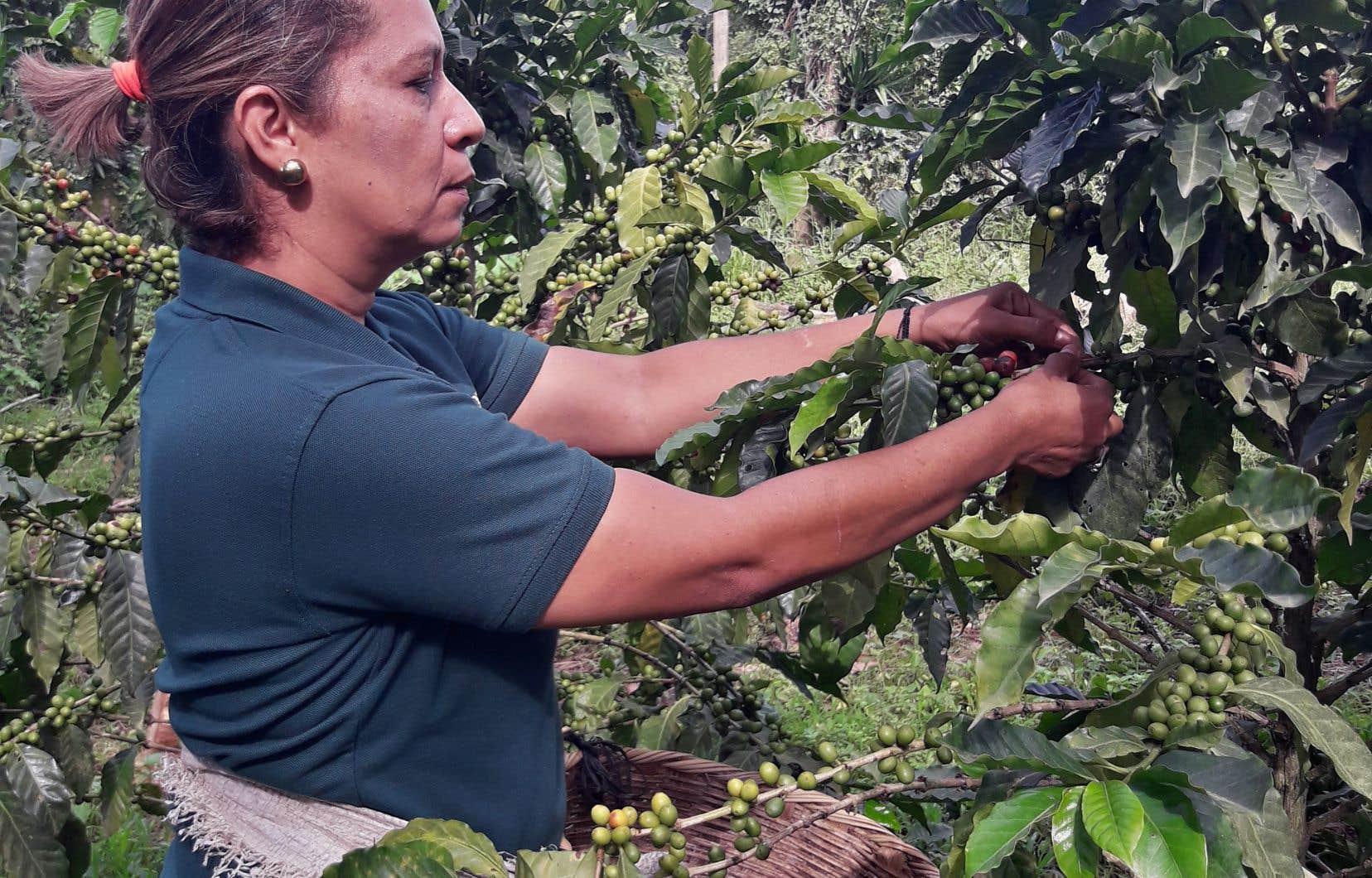 Après avoir travaillé sur l'accès aux terres et aux moyens de production, SOCODEVI s'attelle maintenant au financement de la production des femmes.