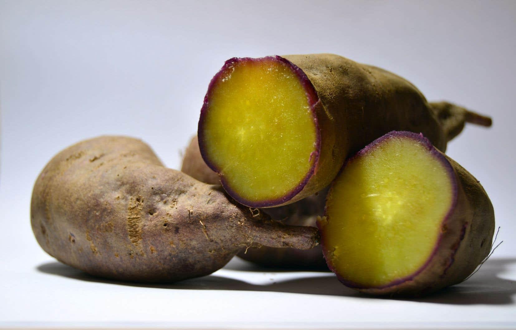 Avec une chair jaune et une saveur proche de la châtaigne, la «lira» ne ressemble pas aux autres variétés de patates douces.