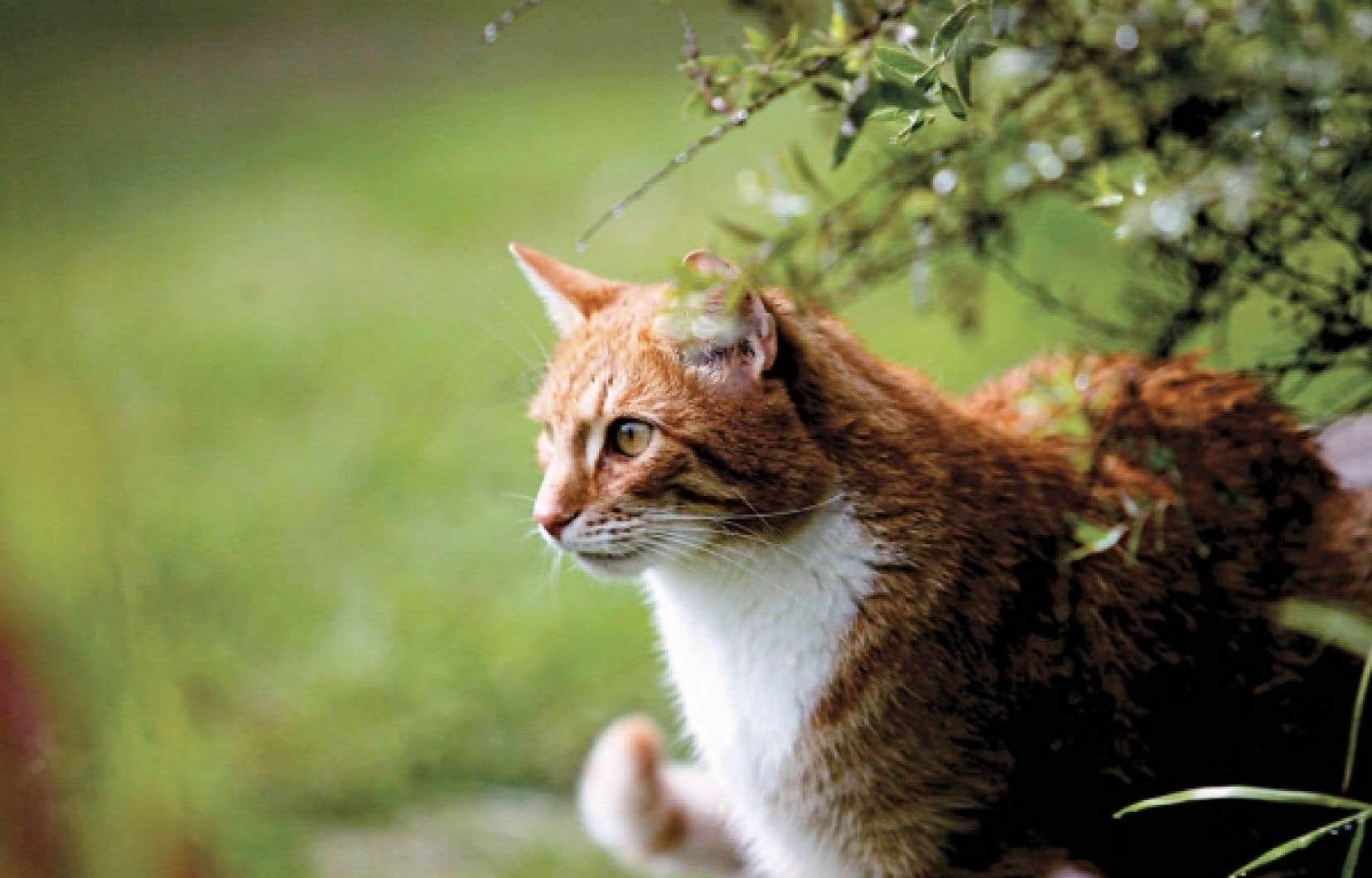 Domestiqué il y a 2000 ans en Égypte, le chat s'est répandu dans l'Europe et l'Afrique, puis chez les Grecs et les Romains pour envahir tout le reste de la planète dans le dernier millénaire.<br />