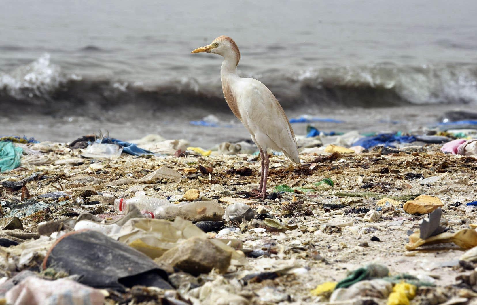 Un oiseau se tient au milieu d'une plage de Dakar, au Sénégal, jonchée de déchets de plastique.