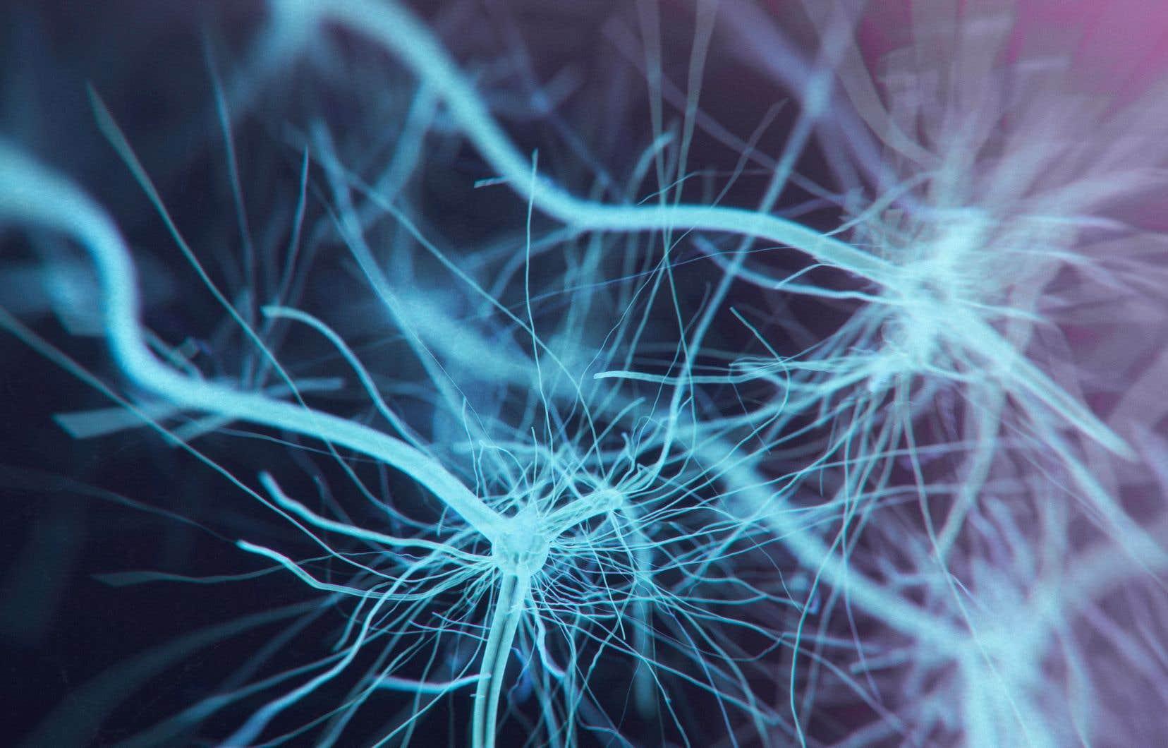 Lorsque la douleur est parvenue à la moelle épinière, l'information douloureuse emprunte aussi un autre circuit qui se dirige quant à lui vers l'amygdale, une structure du lobe temporal du cerveau intervenant dans les émotions et la peur, qui génère cette sensation déplaisante associée à la douleur qui apparaît à peu près en même temps que la sensation physique de la douleur.
