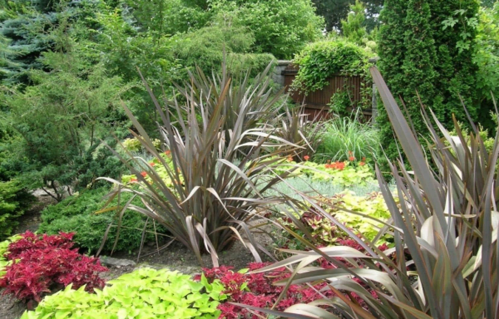Aménagement D Un Parterre De Fleurs tour du monde végétal - le lin de nouvelle-zélande sort du