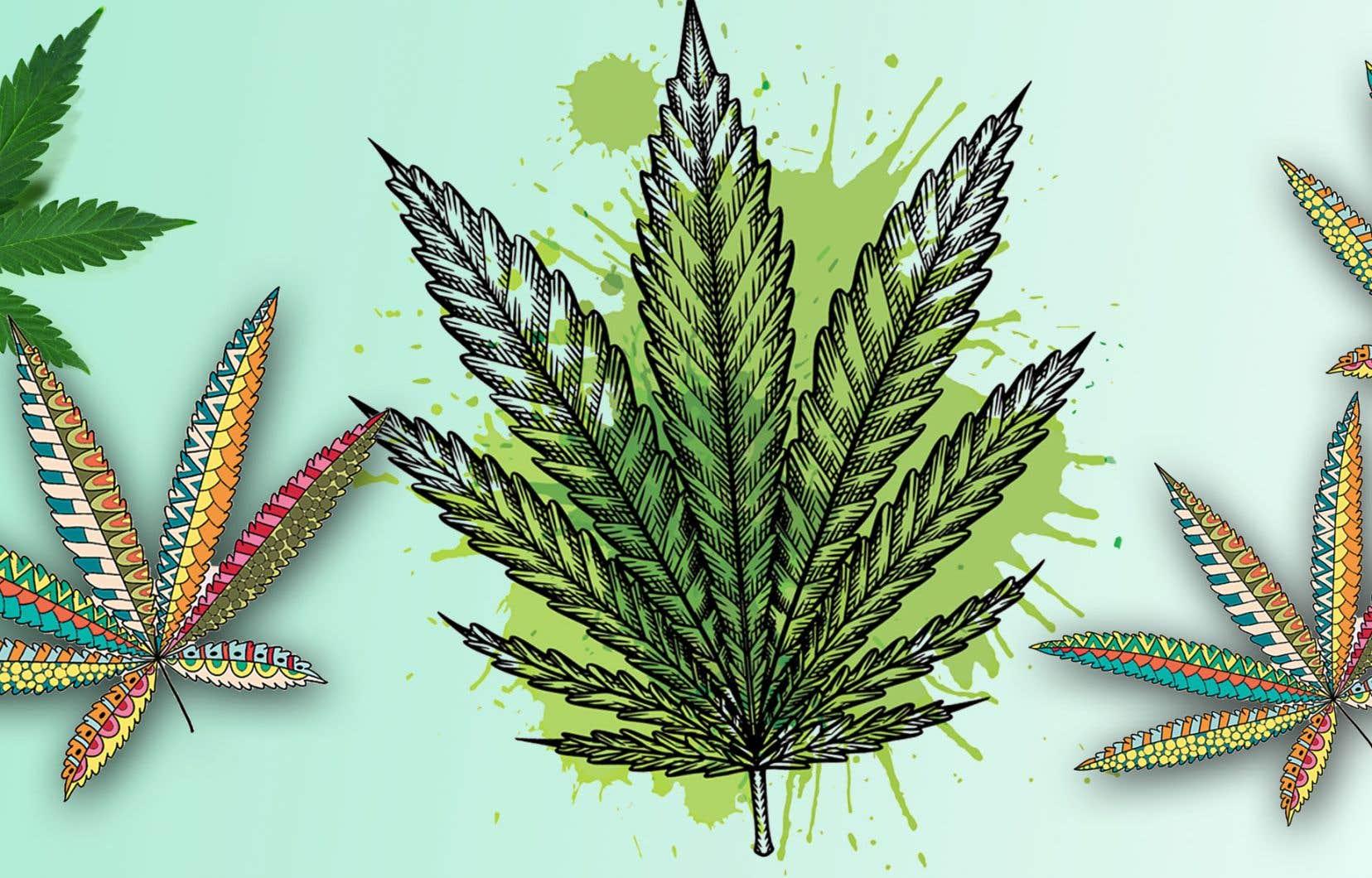 La façon dont on parle de cette drogue a évolué au fil du temps. Les mots pour la dire ont changé. Et ce, de manière marquée depuis la légalisation du cannabis.