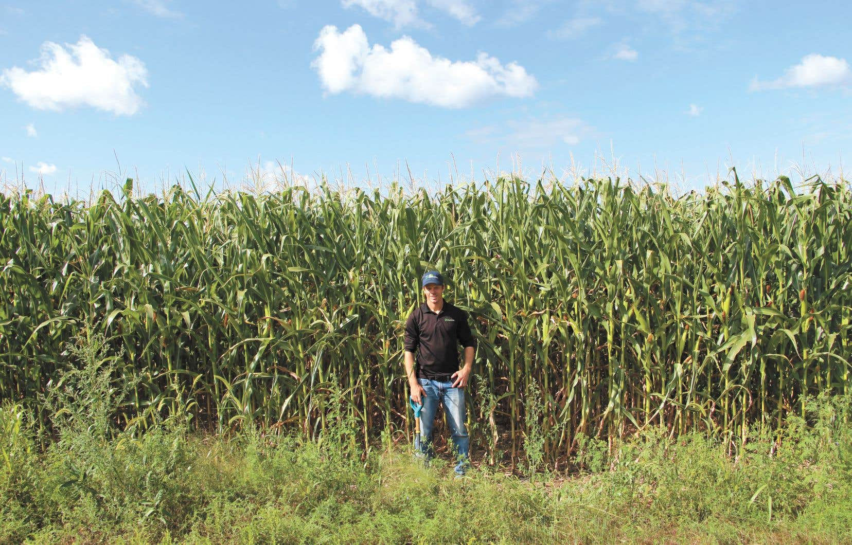 Louis Pérusse, agronome du réseau SCV Agrologie, a mené un projet de recherche qui suscite de l'espoir chez ceux qui souhaitent une solution pour diminuer l'usage du glyphosate.