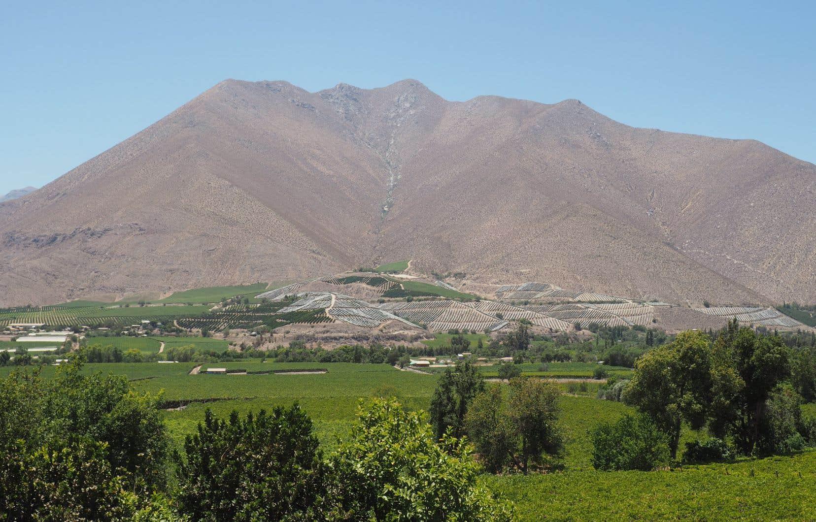 Le soleil brille quelque 300 jours par année dans la vallée de l'Elqui, située à environ 550km au nord de Santiago au Chili.