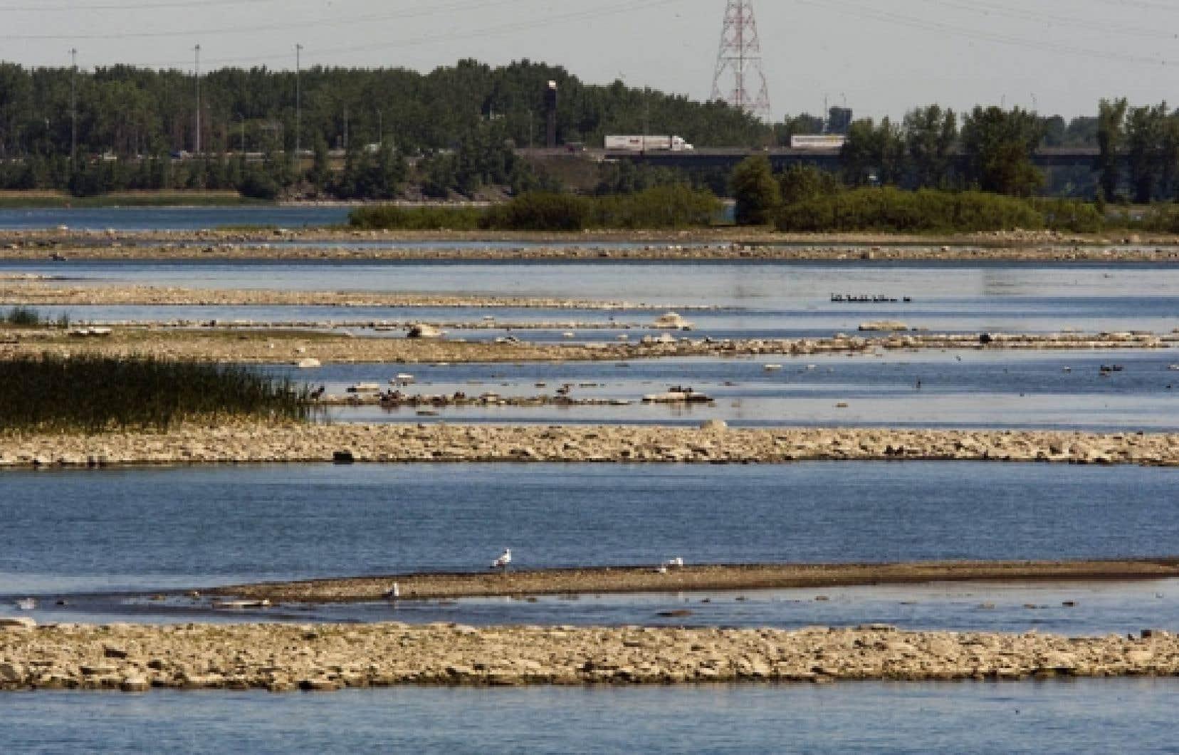 C'est par milliers que se comptent les poissons morts depuis quelques jours dans des cours d'eau de la région Chaudière-Appalaches et les rivières Nicolet et Bécancour, au point qu'une mortalité importante a même été enregistrée dans le fleuve, à l'embouchure de la Bécancour. On a relevé dans ces cours d'eau des températures atteignant 35 °C, alors qu'au-delà de 30 °C, le métabolisme des poissons d'eaux froides s'arrête.<br />
