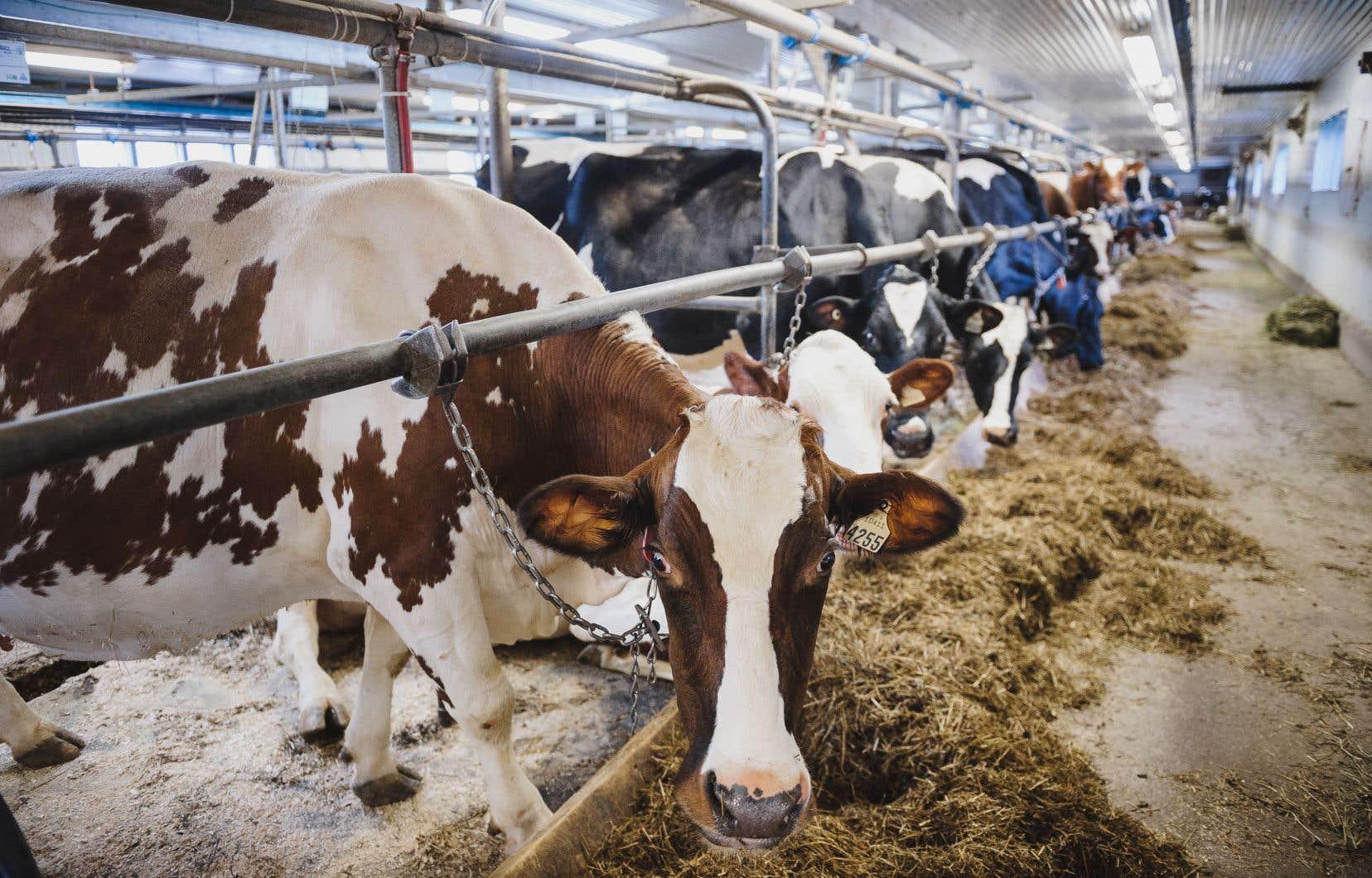 Les agriculteurs, et notamment les producteurs laitiers, avaient hâte de savoir ce que le ministre des Finances avait à leur offrir.