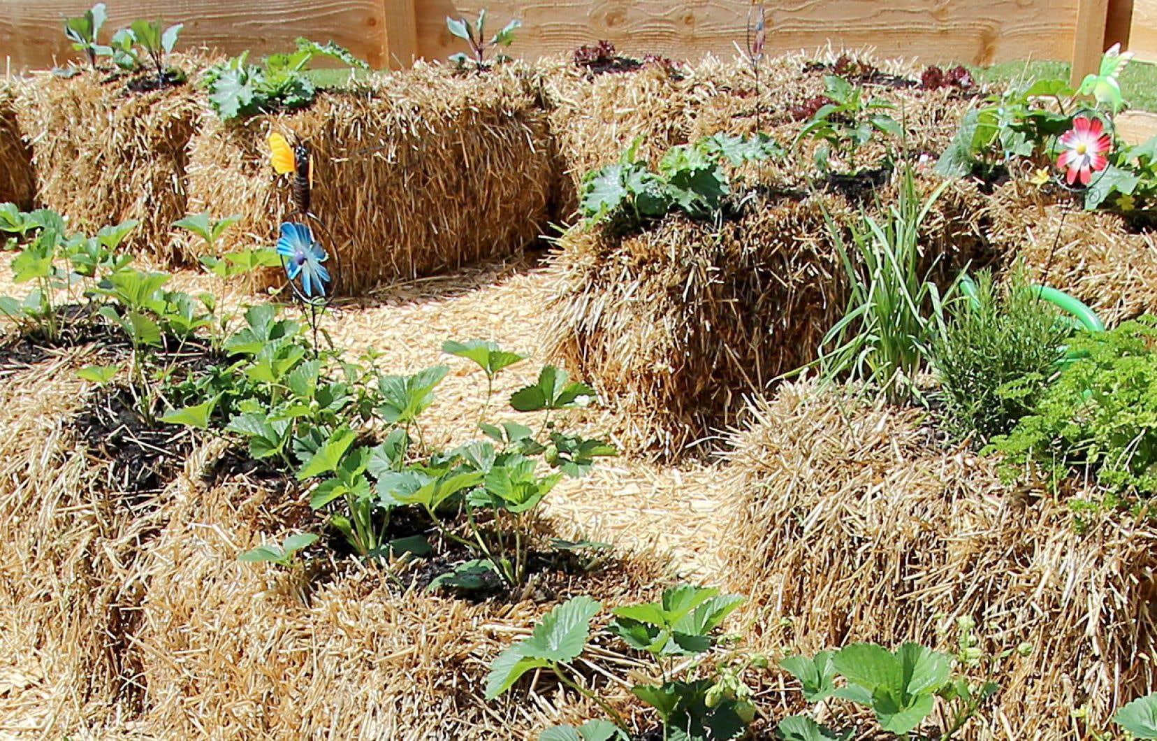 D'abord, on doit choisir de la paille de qualité, de préférence bio, et de blé, car l'orge et l'avoine se décomposent un peu trop vite.