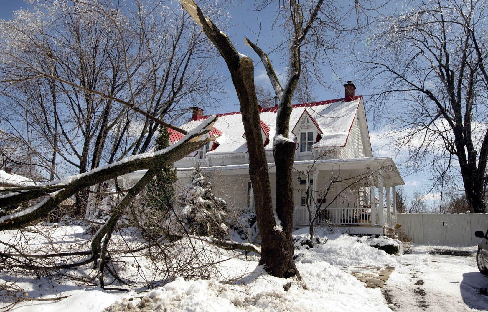 À Sainte-Rose, un vieil arbre n'a pu résister au poids du verglas.
