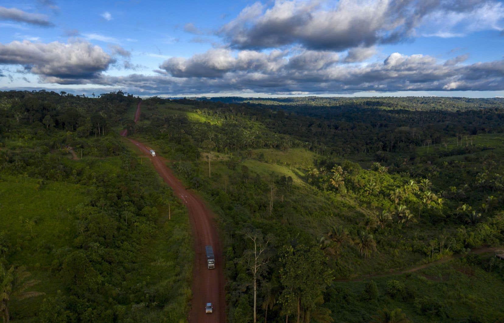 Le projet Global Forest Watch rapporte, sur la base de données satellitaires, que 12 millions d'hectares de couverture arborée ont disparu l'an dernier sur la Terre, ce qui en faisait la plus mauvaise année sur deux décennies après 2016, 2017 et 2014.