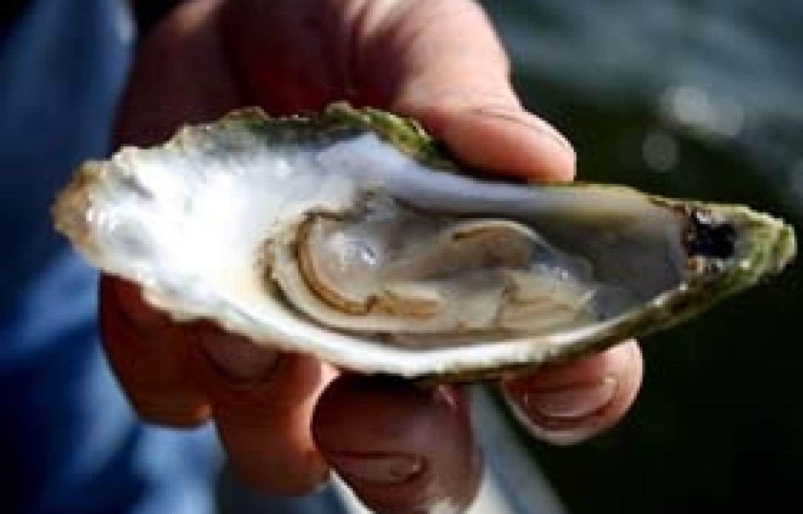 Une huître d'appellation Rocky Bay on ne peut plus fraîche.