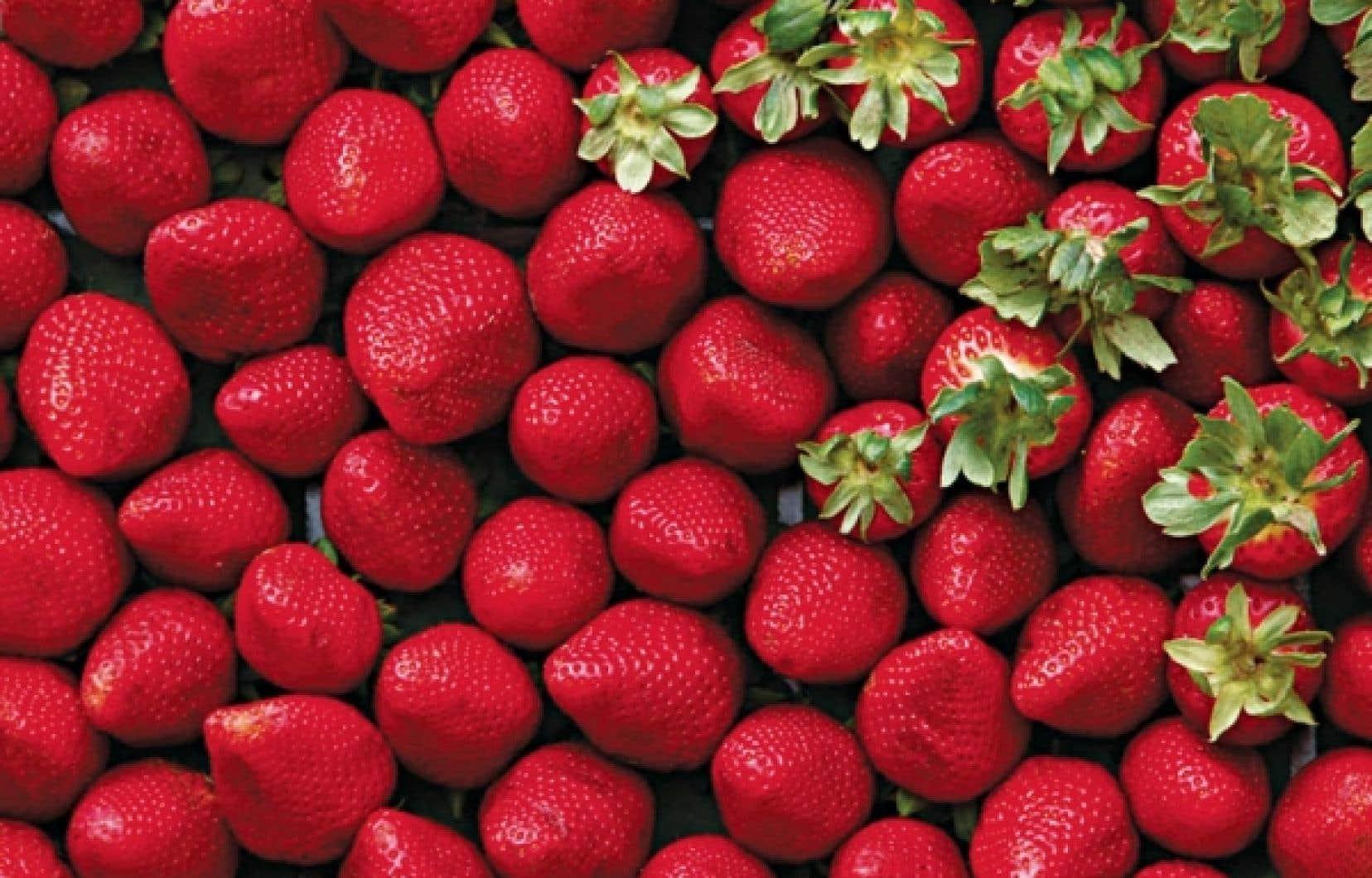 La station Pavlovsk&nbsp;contient plus de&nbsp;5000 plantes&nbsp;diff&eacute;rentes, dont&nbsp;1000 vari&eacute;t&eacute;s de fraises seulement.<br />