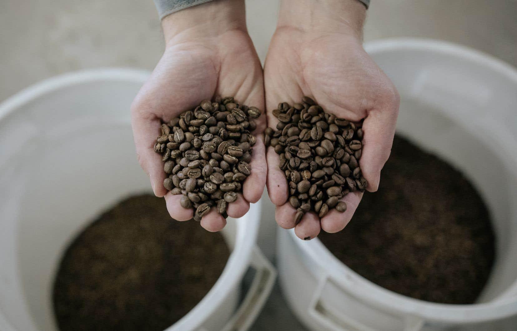 En Europe, on aime la torréfaction noire. Le sucre a brûlé plus longtemps et le café est plus amer.<br />