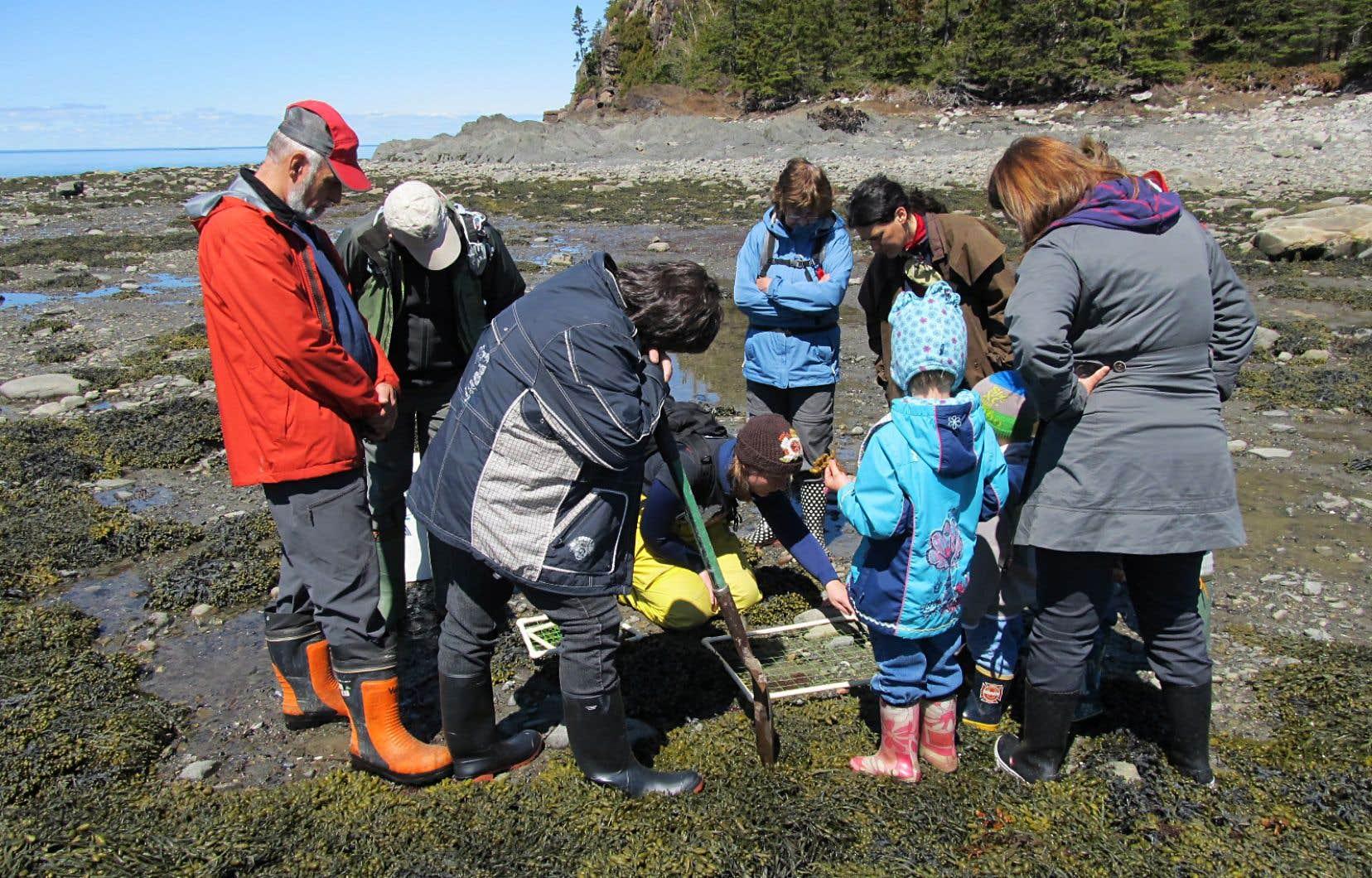 Un biologiste présente à des enfants les organismes vivant dans un marais salé au Parc national du Bic.