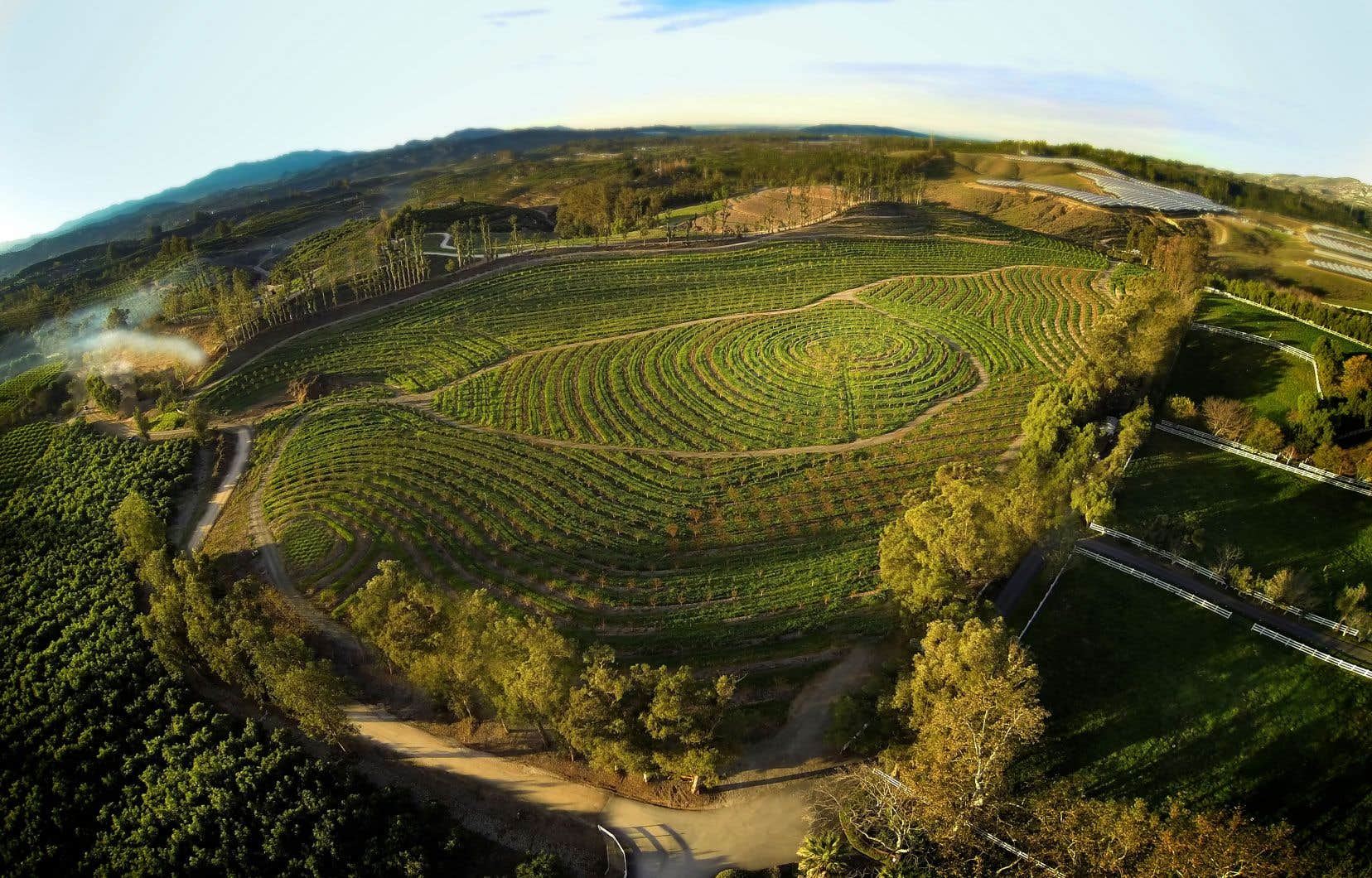 La plantation d'abricotiers à Moorpark, en Californie, est devenue certifiée biologique et biodynamique avec des dizaines de variétés de fruits à noyau et des tonnes d'animaux, apprend-on dans le documentaire «Une ferme plus grande que nature».