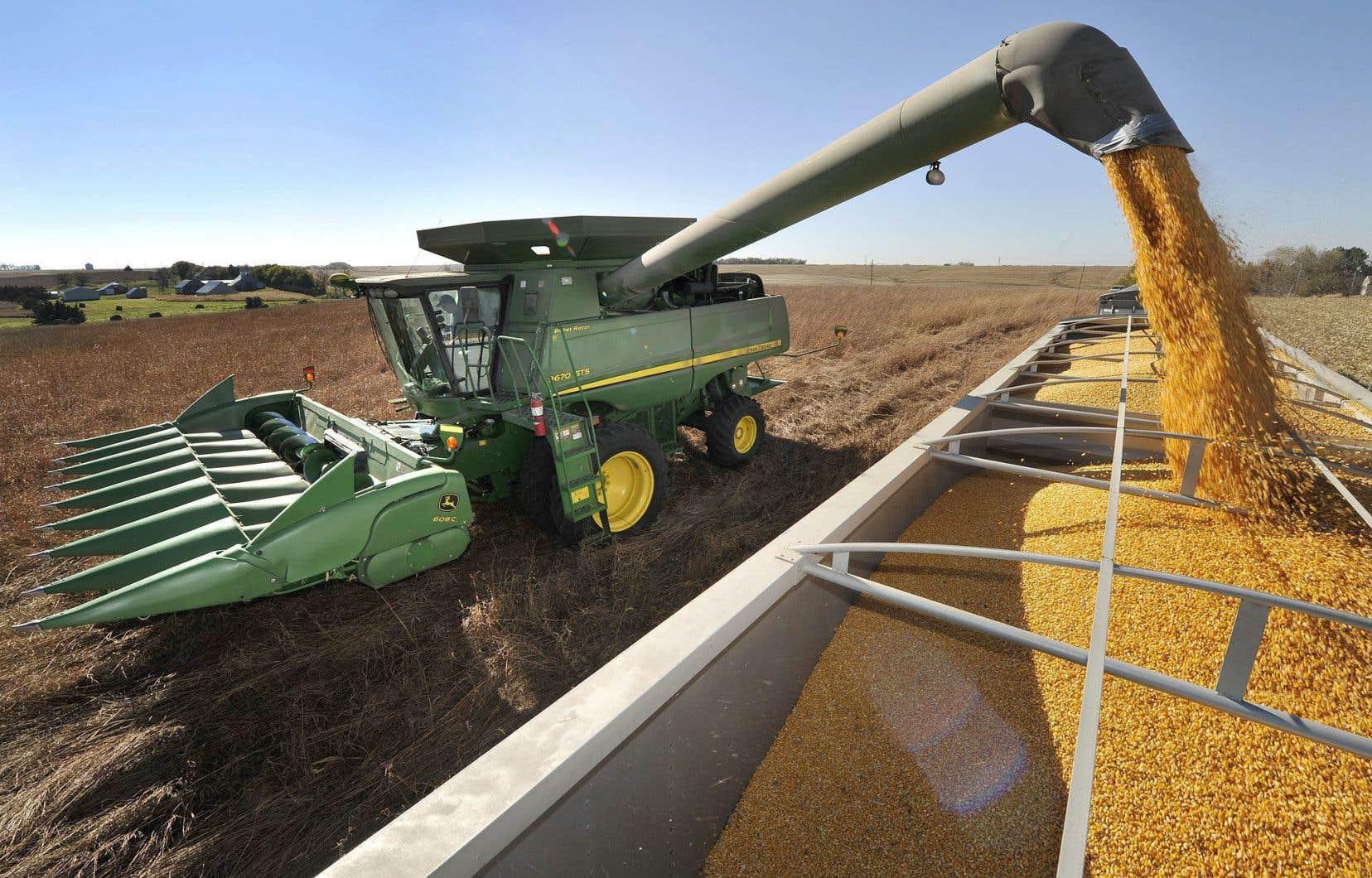 Le maïs génétiquement modifié pose aussi un risque particulièrement élevé pour les producteurs de grains bios.